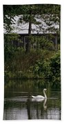 Mute Swan Pictures 199 Beach Towel