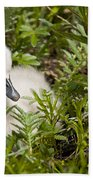 Mute Swan Pictures 210 Beach Towel