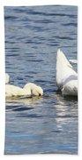 Mute Swans Beach Towel