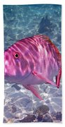 Mutton Encounter Beach Towel