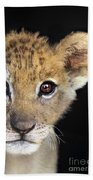 My Grandma What Big Eyes You Have African Lion Cub Wildlife Rescue Beach Towel