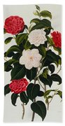 Myrtle Leaved Camellia Beach Towel
