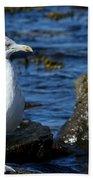 Mystic Seagull Beach Towel