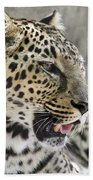 Naples Zoo - Leopard Relaxing 1 Beach Towel