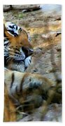 Naptime For A Bengal Tiger Beach Towel