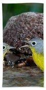 Nashville Warblers Vermivora Ruficapilla Beach Towel