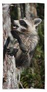 Nasty Raccoon In A Tree Beach Towel
