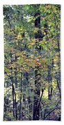 Nature In Autumn 2012 Beach Towel