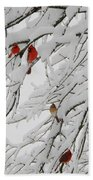 Nature's Christmas Ornaments Beach Towel