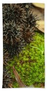 Nature's Moss And Sweetgum Pods Beach Towel
