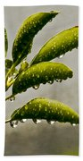 Natures Teardrops Beach Towel