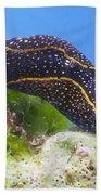 Navanax Inermis Beach Towel