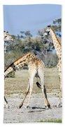 Necking Giraffes Botswana Beach Towel