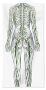 Nervous System, Illustration Beach Towel