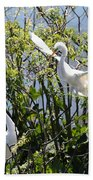 Nesting Great Egrets Beach Towel