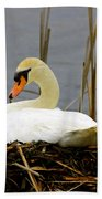 Nesting Swan Beach Towel