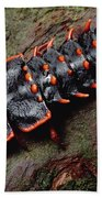 Net-winged Beetle  Borneo Beach Towel