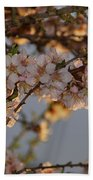 New Blossoms - Old Almond Tree Beach Towel