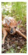 New Fawn In The Forest Beach Towel
