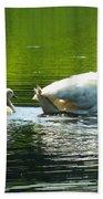 New Mute Swan Family In May Beach Towel