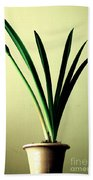 Fanned Leaves Of An Amaryllis Beach Towel