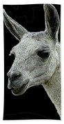 New Photographic Art Print For Sale   Portrait Of  Llama Against Black Beach Towel