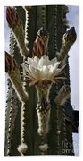 New Photographic Art Print For Sale White Cactus Flower Beach Towel