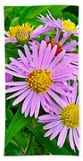 New York Asters In Flower's Cove-newfoundland Beach Towel