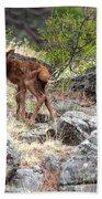 Newborn Elk Calf Beach Towel