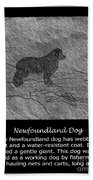 Newfoundland Dog Vintage Sketch Beach Towel
