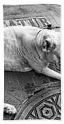 Newsworthy Dog In French Quarter Black And White Beach Sheet