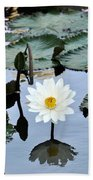 #night Blooming Water Lily Beach Towel