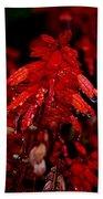 Night Of Glistening Red Salvia Beach Towel