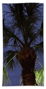 Night Sky Through The Palm Beach Towel