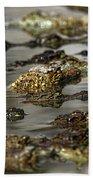 Nile Crocodiles Crocodylus Niloticus Beach Towel
