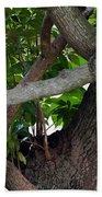 Nispero Tree Beach Towel