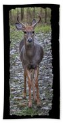 Curious Yearling Deer Beach Towel