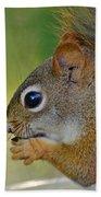 Nom Nom Squirrel  Beach Towel