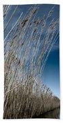 Norfolk Reeds Beach Towel