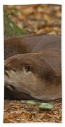 North American River Otter Beach Towel