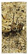 Northern Beach Tiger Beetle Marthas Beach Towel