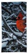 Northern Cardinal In Winter Beach Towel