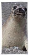 Northern Elephant Seal Weaner Beach Towel