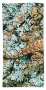 Northern Fence Lizard Beach Towel