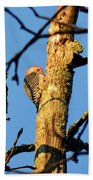 Northern Flicker At Sunrise Beach Towel
