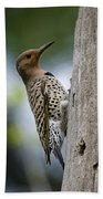Northern Flicker Pictures 35 Beach Towel