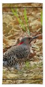 Northern Flicker Woodpecker Beach Towel