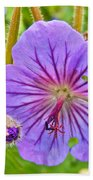 Northern Geranium By Transfiguration Of Our Lord Russian Orthodox Church In Ninilchik-ak Beach Towel