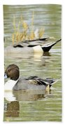 Northern Pintail Ducks  Beach Towel