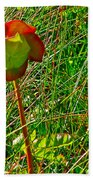 Northern Pitcher Plant In French Mountain Bog In Cape Breton Highlands-nova Scotia  Beach Towel